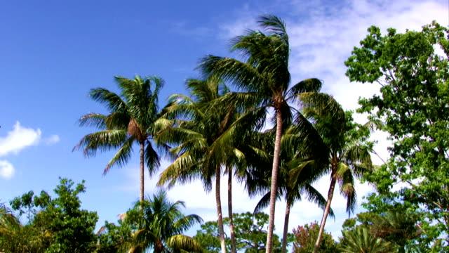 Palmen bewegen sich im Wind mit Himmel