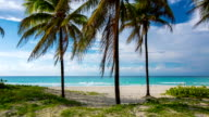 Palm Trees on Tropical Beach in Varadero , Cuba