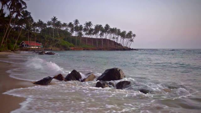 Palm trees on tropical Mirissa Beach, South Coast of Sri Lanka, Asia