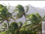 Palm trees on windy day.