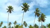 HD: Palm Trees
