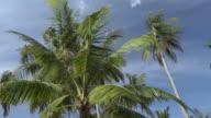 PAN / Palm trees