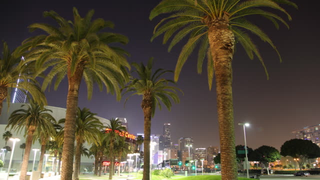 T/L WS Palm trees with illuminated Staples Center in background, night / Los Angeles, California, USA
