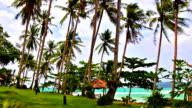 Palms grove on the tropical beach