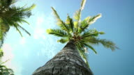 Palmtrees (HD 1080)