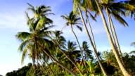 Pamltrees