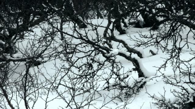 Pan across snow falling on bare bushes.