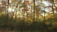 Pan across woods with colorful autumn foliage.