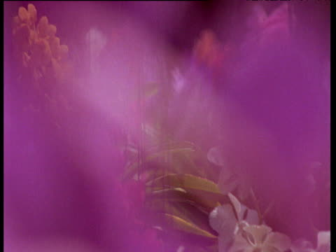 Pan left and right across colourful orchid flowers