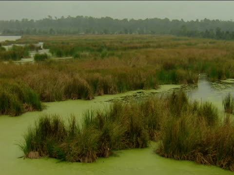 Pan left over algae-covered marshes
