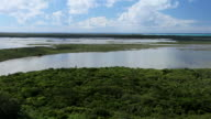 Pan of Mangrove forest