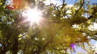 Pan of Sun Shining Through Trees