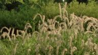 Pan right across bushy flowers in a botanical garden.