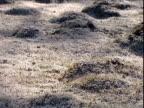Pan right across frosty moss in winter UK