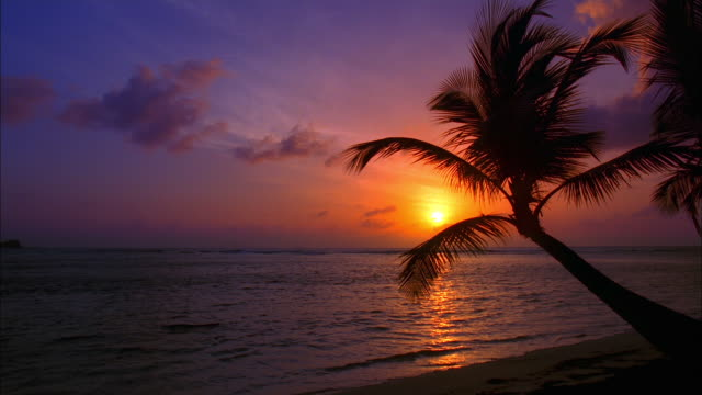 Pan right from headland to palm-tree on beach in breeze silhouetted by orange sunset, Grenadines Available in HD.