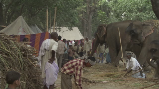 Pan right over line of elephants, Sonepur Mela Available in HD.