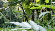 Pan shot 4K, Rain forest around Mon Tha Than waterfall.