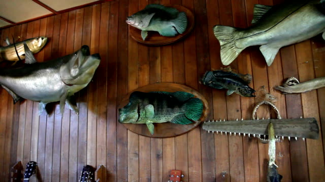 Pan shot of stuffed trophy fish on wooden wall.