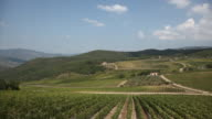 Pan shot of vineyards