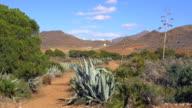 pan shot, wild aloe vera and agave plants in desert landscape near San José