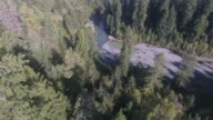 Pan to look up at the tallest trees in the WORLD Redwood, Aerial, 4K, 18s, 29of50, Forest Trees, Northern California Tallest trees in the world, Sun flare, Hyperion Tree, world record, Stock Video Sale - Drone 4K Nature/Wildlife/Weather Drone aerial video