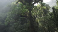Pan up a large tree in the El Triunfo biosphere reserve in Mexico.