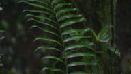 Pan up the leaves and stem of a plant in the El Triunfo biosphere reserve in Mexico.