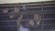 Pandilleros encarcelados mataron a dos guardias de seguridad y el lunes mantenian secuestrados a otros cuatro en medio de un motin en un centro de...