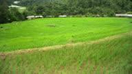 Schwenken: ein breites Reisfeld unter Gebirge