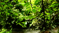 Panning Across Tree Leaves and Branches with River Background