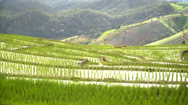 panning: among long mountain range, cloud reflect on fresh water in delighted rice terrace