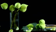 panning : arranged lotuses in a glass vase and on their leaf