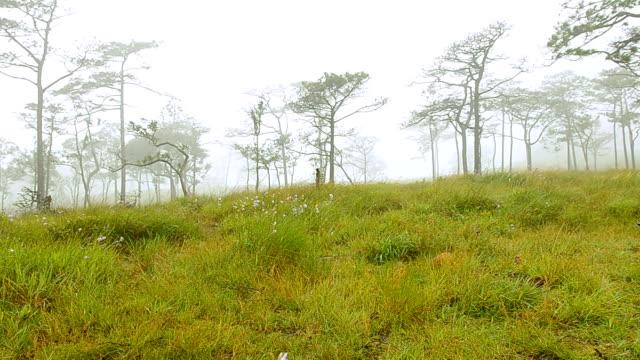 pannen: Bank is op dennenbos