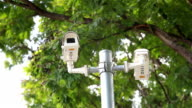 HD panning: CCTV on pole under tree.