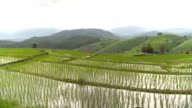 panning: cloud reflect on fresh water in delighted rice terrace