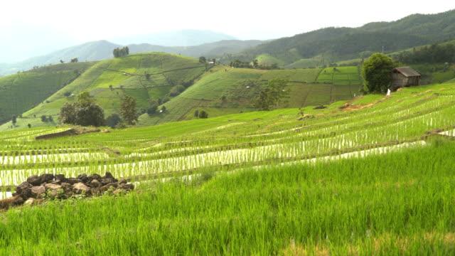 Schwenken: erfreut Reis Terrassen und gebogenen Bereich mit frischem Wasser