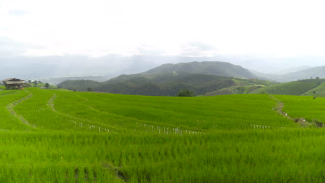 panning: elighted rice terrace is long as you can see
