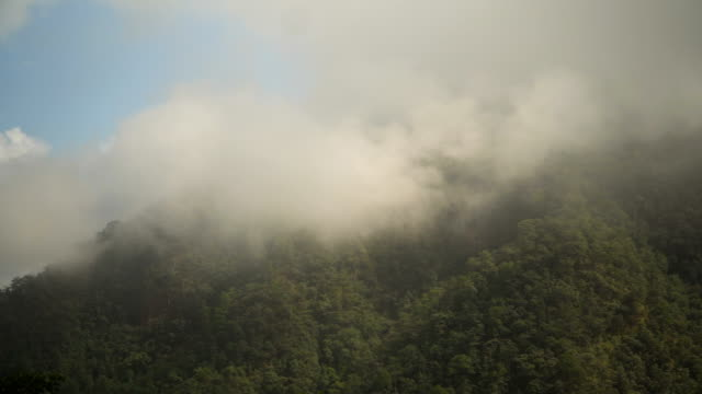 Panning : fog covering mountain in morning