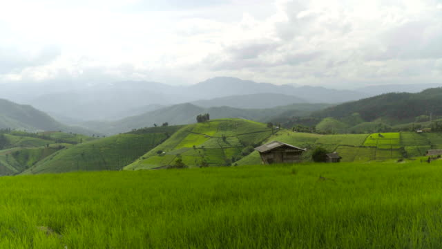 panning from wide rice area: delighted rice terrace on mountain range