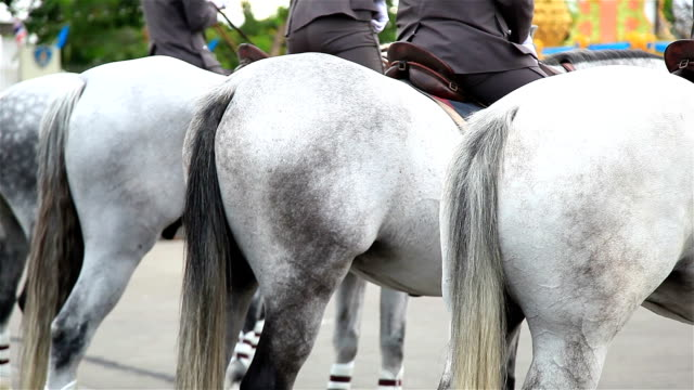 HD Panning: Horse buttock.