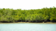 panning : Mangrove islands in low tide in afternoon