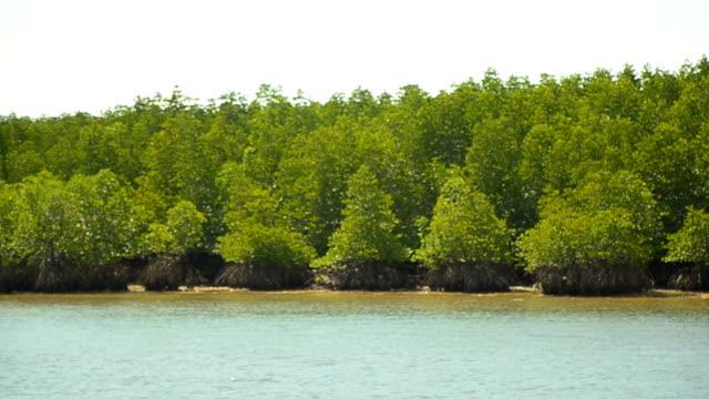 panning : Mangrove islands in low tide