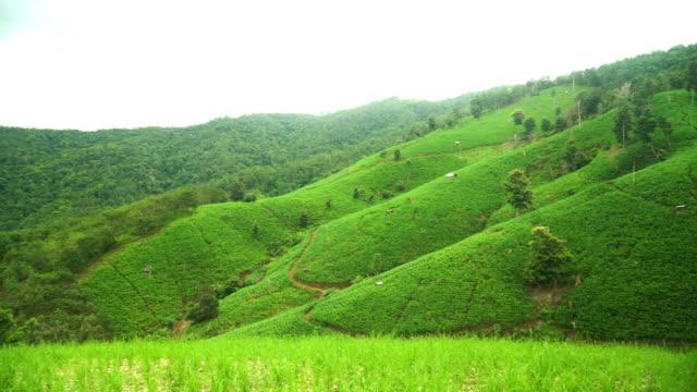 Schwenken: Bergkette mit grünen Reisterrassen