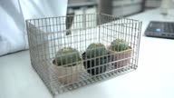 panning : move cactus specimens in racker