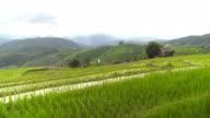 Schwenken: Pa Pong Pieng terrassenförmig angelegten Kurve Reisfeld am Berghang