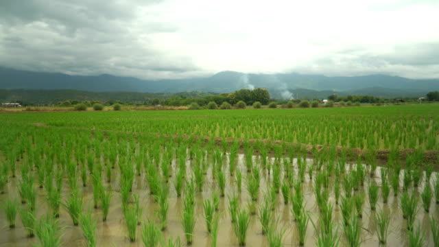 Schwenken: Reis Wrap Umgebung Bergkette