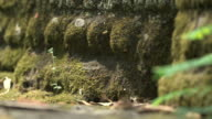 Panning shot across moss covered stone coverings on the Bayon temple at Angkor.