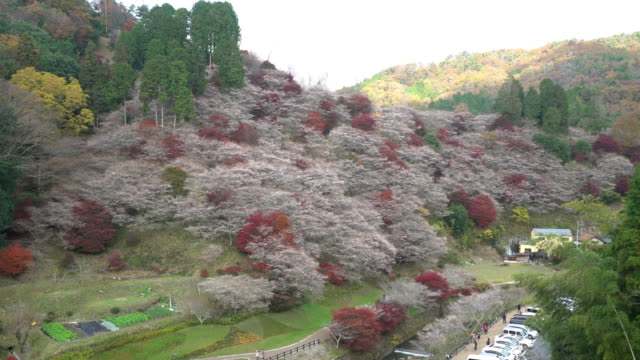 Panning shot: Autumn Red Leave Obara Toyota Nagoya Japan