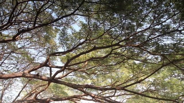 Panning shot beautiful  branch of tree