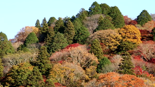 Panning shot korankei Forest park with Autumn Red Leave Nagoya Japan